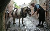 pony_1298564c-2