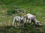 Sweet Spring Babies