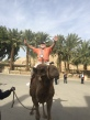 When in Jericho, why not ride a camel like Cecil did?